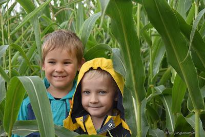 Verstecken im Mais