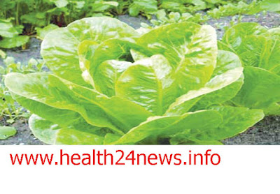 15 health benefits of lettuce leaf