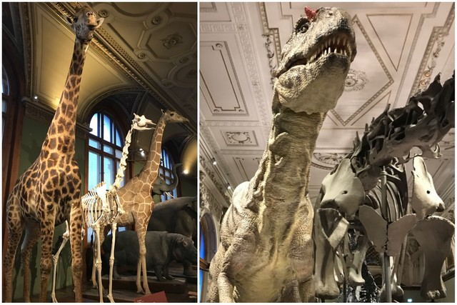 Museo de Historia Natural de Viena - Interior - Esqueletos - Dinosaurios