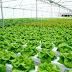 """""""TamanBibit.com"""" Sahabat bagi Anda yang Hobi Tanam Sayuran di Rumah"""