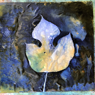 Wet cyanotype_Sue Reno_image 822