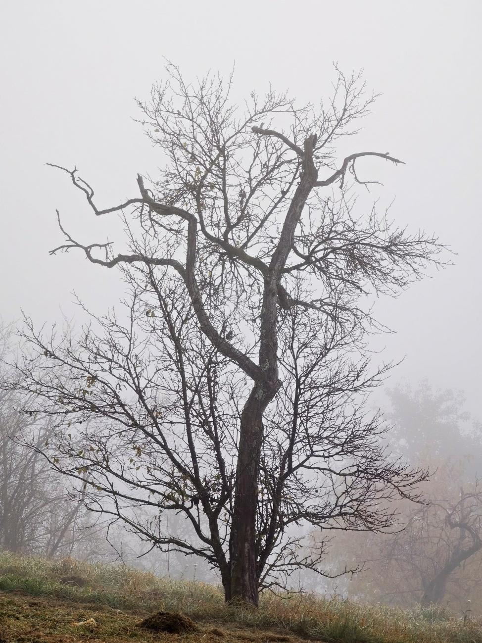 Bild des Tages #152 — Durch den dicken Nebel war kein Wetter zu erkennen nicht gewesen