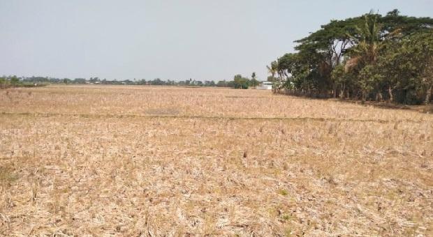 Ribuan Hektare Areal Sawah di Karawang Kekeringan