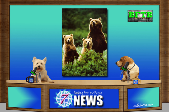 BFTB NETWoof News for dogs