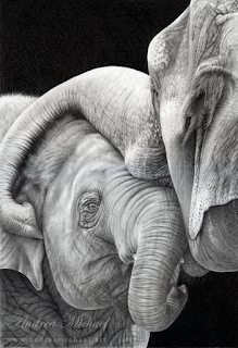 Black-and-white drawing of an elephant embracing another  elephant with its trunk.
