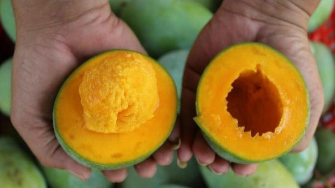 Harga Hemat! Bibit Tanaman Buah Mangga Alpukat Kota Bogor #bibit buah langka