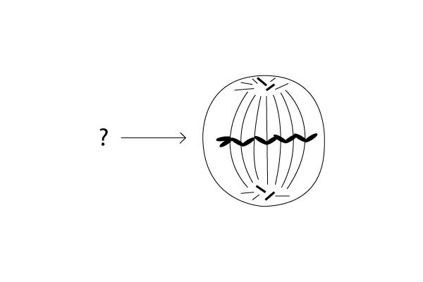 1.Perhatikan gambar fase pembelahan mitosis sel!