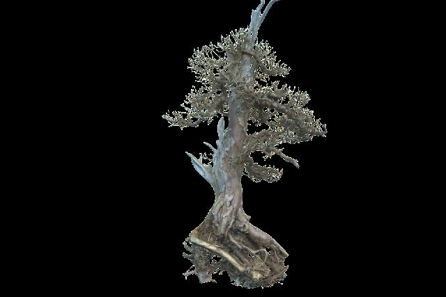 DEATH TREE 003