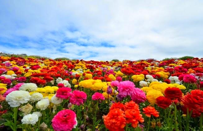 florist dunia penuh bunga indah