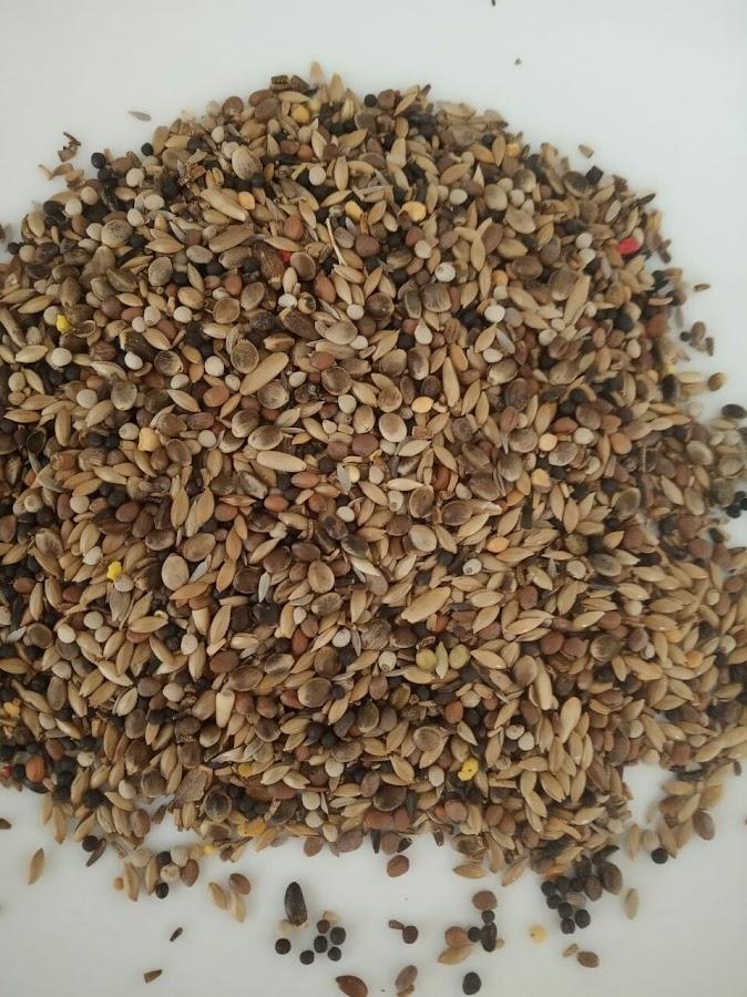 semillas-pajaros