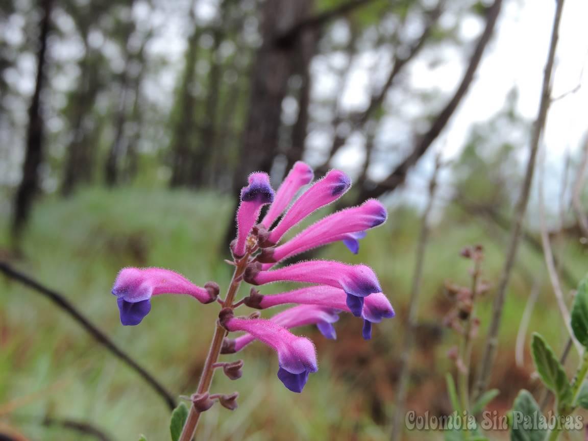 flores en el cerro quitasol
