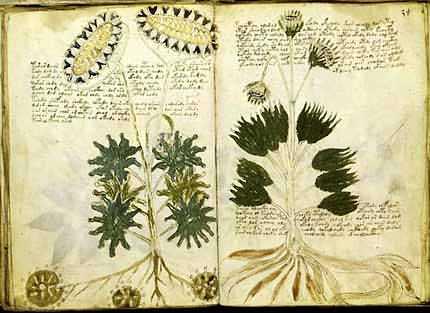 Il Manoscritto Voynich è un manoscritto cifrato, talvolta attribuito a Roger Bacon.