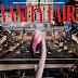 #NewsModa @MaxGallegos2015 Paolo Sorrentino es el director artístico de la nueva edición de Vanity Fair Italia .