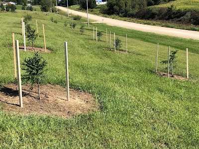 Tree Stakes at Woodward Acres