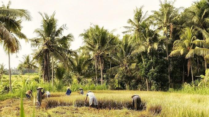 Kolaborasi BUMDes dan UMKM | Strategi Desa Hadapi Ancaman Resesi