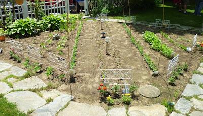 kitchen garden at home