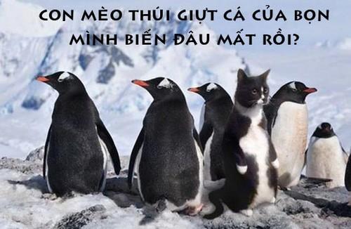 Hình ảnh chim cánh cụt hài hước