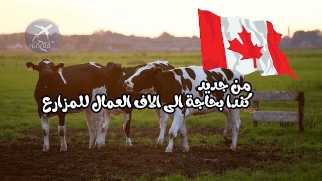 كندا بحاجة الى الاف العمال للعمل في مزارع كندا مرة اخرى – سجل ولا تضيع الفرصة 2019