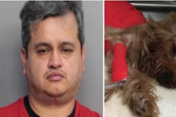 Heartless man beating Yorkie to death for vomiting in his car