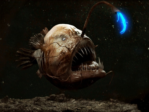 تصوير سمكة الأعماق المرعبة
