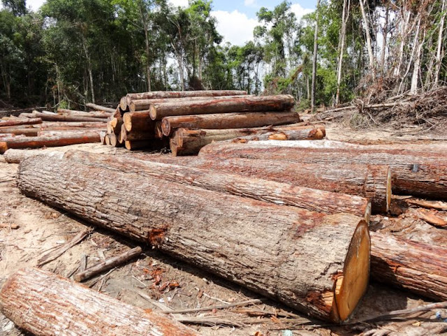 Timber that was allegedly illegally logged sits inside an ELC belonging to Try Pheap in Kampong Thom In 2013. Photo supplied
