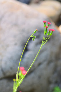 red flowers growing along a river