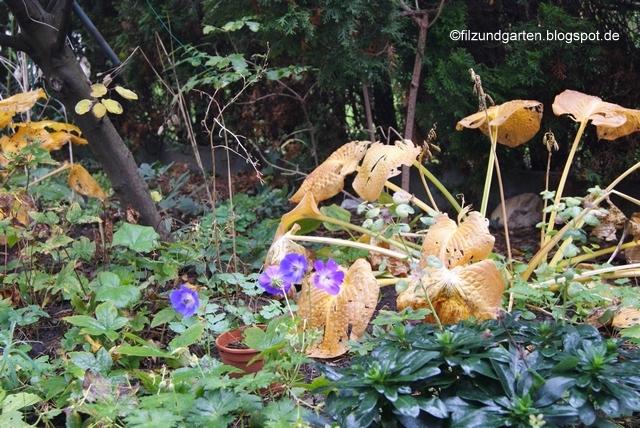 Urheberrechtsverletzung von Filz und Garten