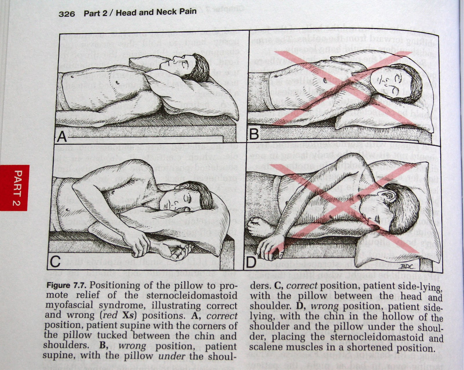 The Anatomy Of Touch Nocturnal Neck Advice How To Use