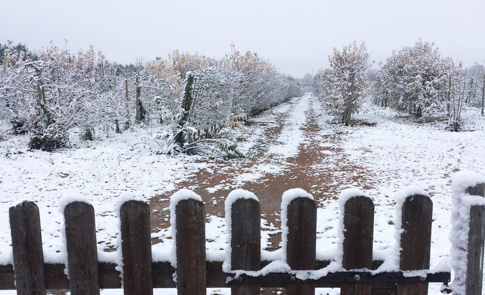 travaux du jardin en hiver