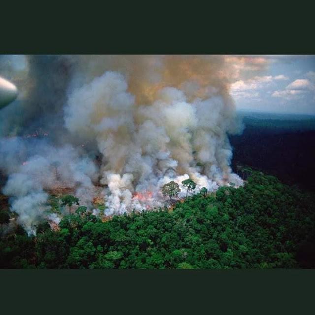 RỪNG AMAZON Ở BRAZIL ĐÃ CHÁY ĐƯỢC 17 NGÀY NGƯỜI TA ĐÃ CHIA SẺ NHƯ CHÁY NHÀ THỜ PARI CHƯA