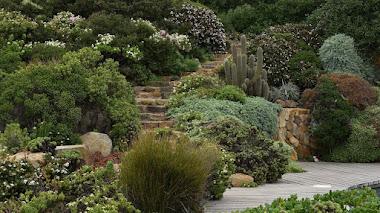 Jardín Bahía Azul en Chile: plantas nativas con vistas al Pacífico