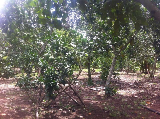 Đất thổ vườn xã Bảo Quang Thị Xã Long Khánh 02