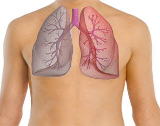 3 Cara Membersihkan Paru-Paru Dari Racun Yang Mengendap