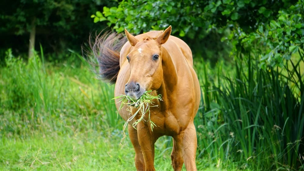 Horse Feed: What to Feed a Horse, When to Feed Them and Why