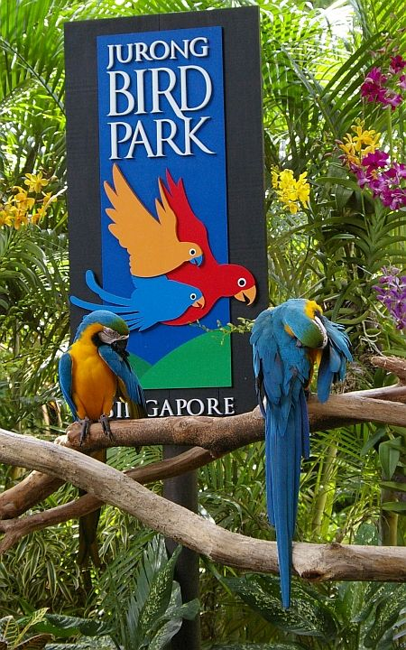 Top Rated Places to Visit in Singapore | Jurong Bird Park, Singapore