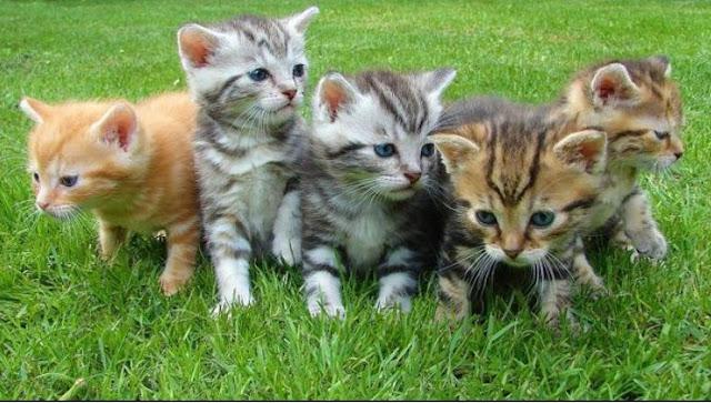 10 Kesalahan dalam Memelihara Kucing