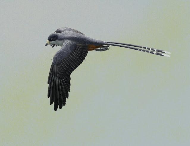 Bird beak revealed by laser imaging informs early beak function and development