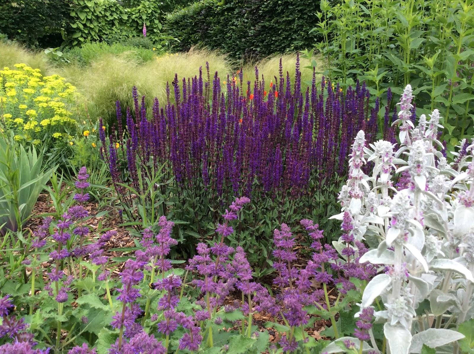 Ongekend Acht planten voor een tuin op droge grond! GX-59