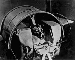 First Laika, Ham and Yuri Gagarin go to space