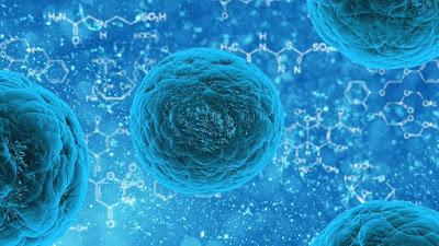 Stem Cell: Pengertian, Stem Cell Embrionik, Pentingnya, dan Cara Mendapatkan Stem Cell Embrionik
