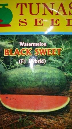 buah keras,tahan simpan,tahan pecah,Daging merah, tahan angkut, cepat panen,rasa manis,murah,inul, Semangka, Black Sweet, Tunas Seed, Gratis