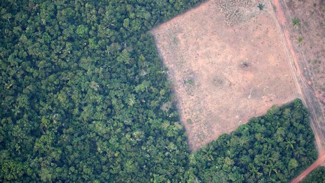 Políticos y empresarios brasileños son investigados por crimen ambiental en las tierras públicas de la Amazonía