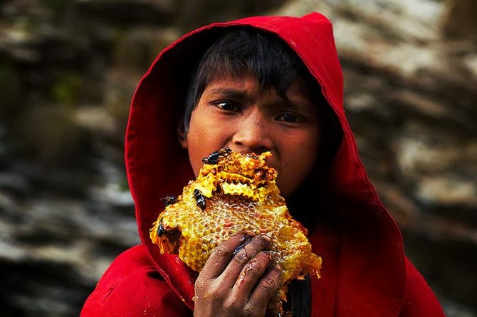 Gurung Child eating a piece of bee hives