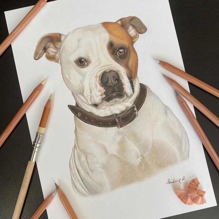 05-Beautiful-dog-Sandrine-R-www-designstack-co