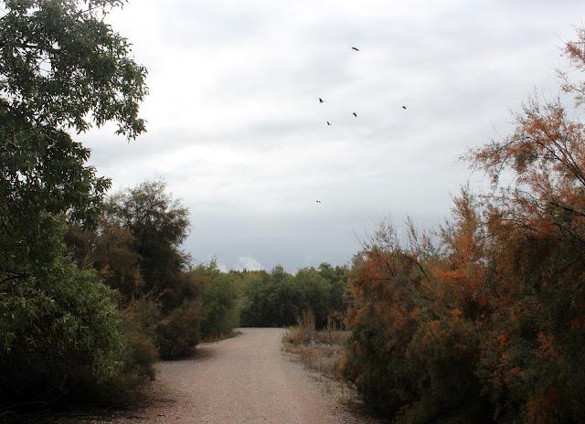 Ruta por el Parque Regional del Sureste de Madrid