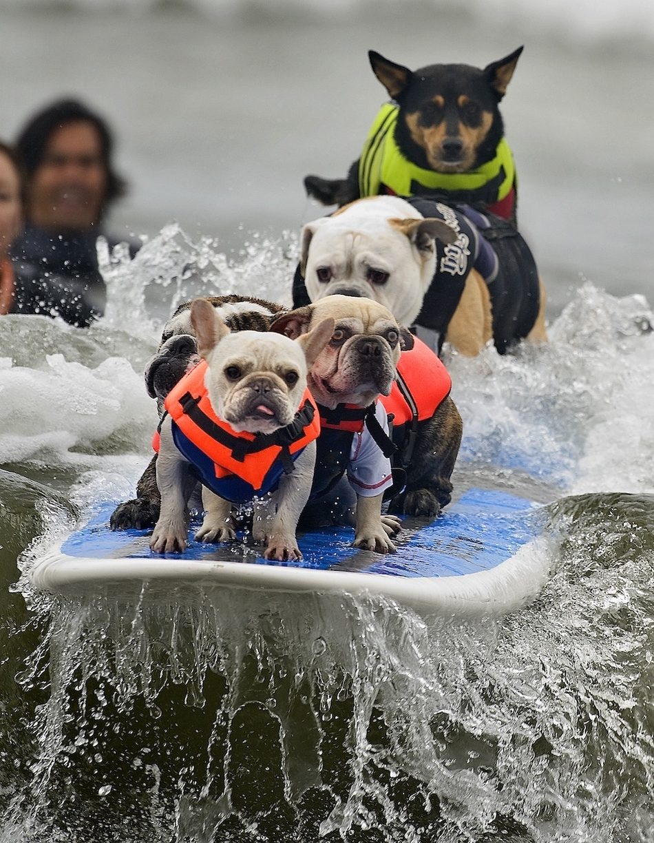 animals extreme sports awesome funny doing amazing surfing dogs dog badass cindy yamanaka ap surf cute fun write quick water