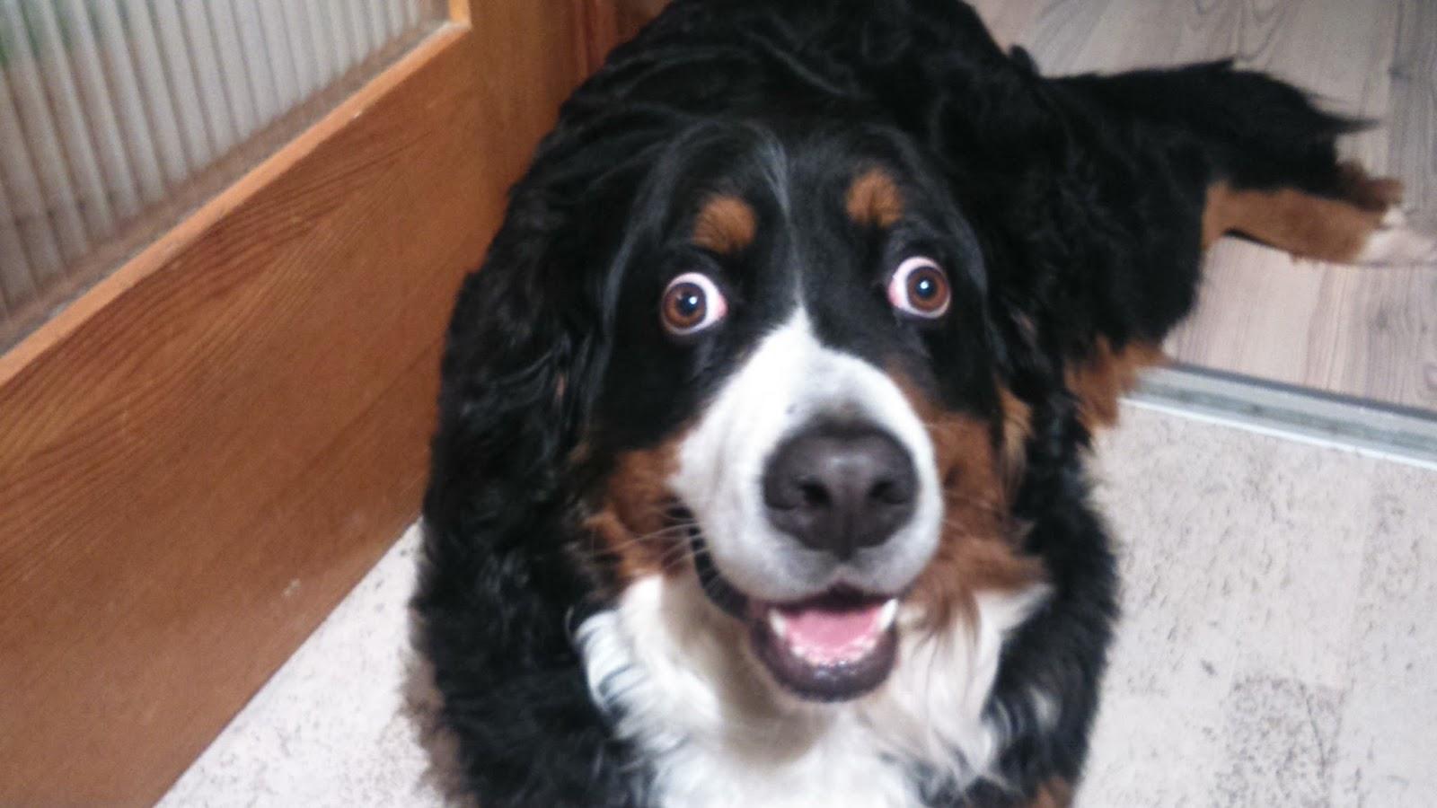 Hunden herpes bei Herpes beim