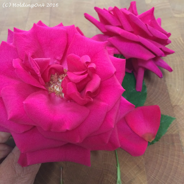 Fragrant deep pink red rose