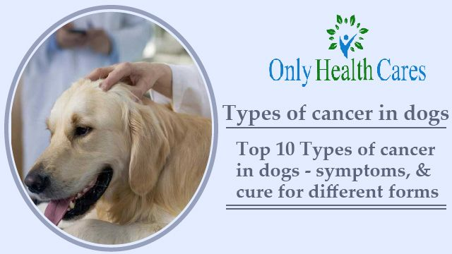 Types of Cancer in Dogs