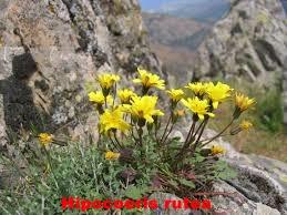 Parque natural Sierras Subbeticas Cordobesas